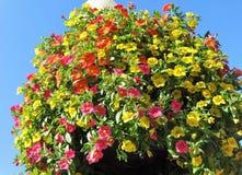Million de fleur de Bells en été Photos stock