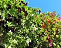 Million de fleur de Bells en été Photos libres de droits