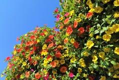 Million de fleur de Bells en été Photographie stock