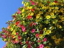 Million de fleur de Bells en été Images libres de droits