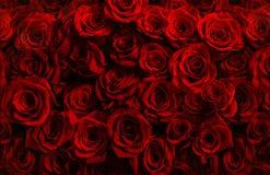 Million de roses rouges fraîches sur un fond noir Greetin Photographie stock
