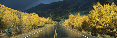 This is the Million Dollar Highway in the rain. The road is dark and wet. There are aspen trees with gold leaves on either side of Royalty Free Stock Images