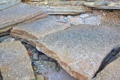 75 Million Jahre alte versteinerte Shell Lizenzfreies Stockfoto