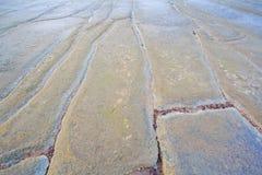 75 Million Jahre alte versteinerte Shell Lizenzfreies Stockbild