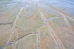 75 Million Jahre alte versteinerte Shell Lizenzfreie Stockbilder