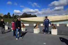 2012 Million Tatzen-Weg-Ereignis in Canberra Stockfotos