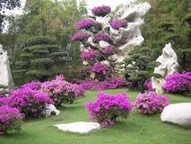 Millionnoletnikh do parque das pedras Imagem de Stock