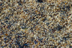 Millions of beach shells Royalty Free Stock Image