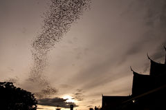 Millions Of Bat Seek For Food In Evening Stock Photography