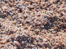 Millions of small shells on the beach Royalty Free Stock Photo