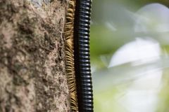 Millipede Legs and body boarder royalty free stock photos