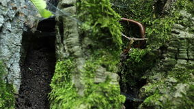 Millipede on Tree Moss. A milipede insect, hidden on dark wild greenery, in the forest stock video footage