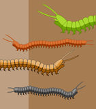 Millipede Worms Stock Photography