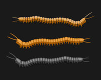 Millipede Worms Vector Royalty Free Stock Photography