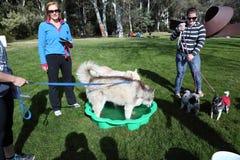 2012 millones de eventos del paseo de las patas en Canberra Imagenes de archivo