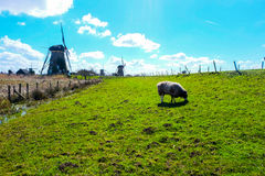 The Mills of Kinderdijk - Netherlands Royalty Free Stock Photo