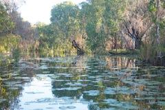Millstream Chichester nationalparkvildmark Australien Arkivbilder