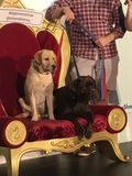 Milo and Honey celebrity dogs royalty free stock image