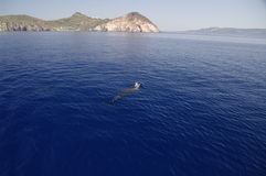 milos Греции дельфина ближайше Стоковое Изображение