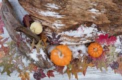 Milou Autumn Seasonal Background rustique Photographie stock