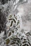 Milou buisson en parc en hiver dans le froid grave Photographie stock