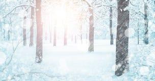 Milou Forest Landscape In Winter Blizzard image libre de droits