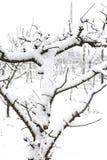 Milou plante fin février après les effets de la masse sibérienne d'air atteinte en Italie du sud dans la Campanie photographie stock libre de droits