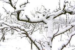 Milou plante fin février après les effets de la masse sibérienne d'air atteinte en Italie du sud dans la Campanie images stock