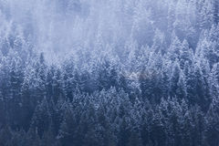 Milou Treeline Images stock
