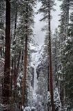 Milou Yosemite Falls encadré par des arbres photographie stock