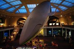 Milstein Hall de la vie 5 d'océan Image libre de droits