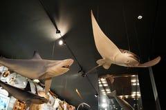 Milstein Hall von Ozean-Leben 3 Lizenzfreie Stockbilder