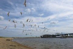 Milwaukee Wisconsin. Seagull in Milwaukee Wisconsin - 794 Bridge nice summer day royalty free stock photography