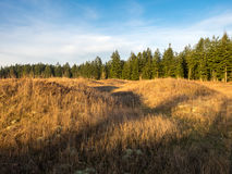 Mima Mounds Afternoon. The mounds with afternoon sunshine Royalty Free Stock Photos