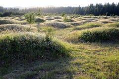 Mima Mounds au crépuscule Images stock
