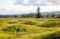 Mima Mounds Natural Area Preserve arkivbilder