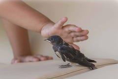 Mimando o pássaro imagens de stock