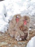 Mime al ` japonés del mono de la nieve del ` del macaque que abraza a su bebé en el frío imagen de archivo