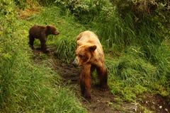 Mime al oso y al cachorro Imágenes de archivo libres de regalías