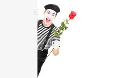 Mime artist holding a red rose behind a panel Royalty Free Stock Image