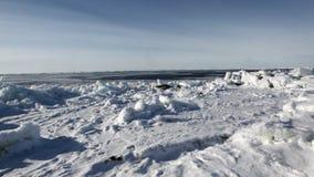 Mime a cría de foca recién nacida linda en campos de hielo metrajes