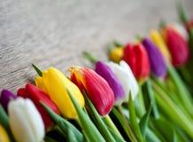 Mime día al ` s del día y de la tarjeta del día de San Valentín del ` s, tulipanes hermosos Imagen de archivo libre de regalías