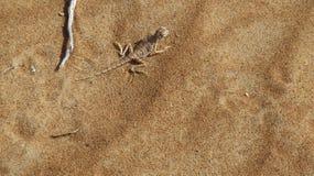 Mimetic гекконовые на песке Стоковая Фотография RF