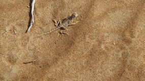 Mimetic gecko på sanden royaltyfri fotografi