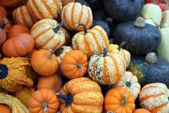 Mimi pumpkin Royalty Free Stock Image