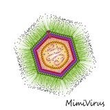 Mimi virus particle structure Stock Images