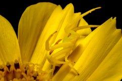 mimicry Foto de archivo