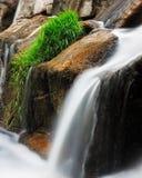 Mimo delle acque Fotografia Stock Libera da Diritti