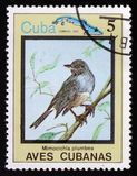 Mimocichla-plumbea und Karte von Kuba, circa 1983 Lizenzfreies Stockfoto