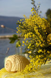 Mimosa 10. Mimosa at the seaside of the montenegro Royalty Free Stock Images